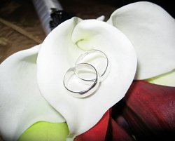 Julio and Krista's Wedding Rings
